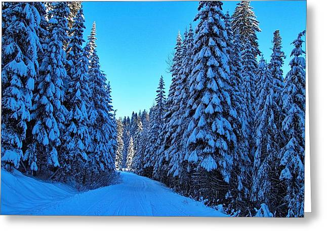 Evergreen Covered In Snow Greeting Cards - Through the forest Greeting Card by Lynn Hopwood
