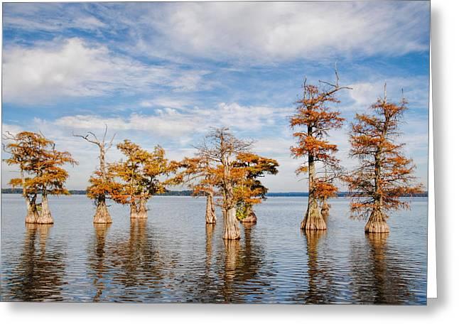 Reelfoot Lake Greeting Cards - Through the Garden of Cypress Greeting Card by Jai Johnson