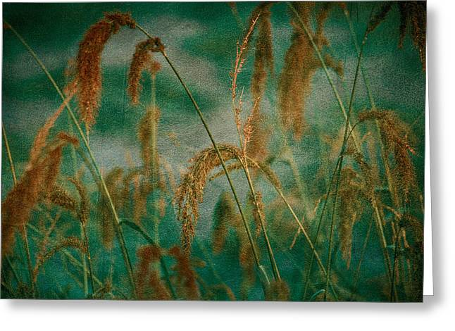 Decor Nature Photo Greeting Cards - Through the Grass Greeting Card by Bonnie Bruno