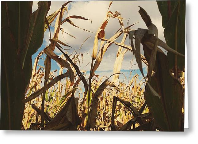 Corn Maze Greeting Cards - Through the Maze Greeting Card by Nikki McInnes