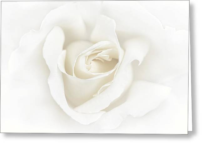 Ivory Flower Greeting Cards - Misty Ivory White Rose Flower Greeting Card by Jennie Marie Schell