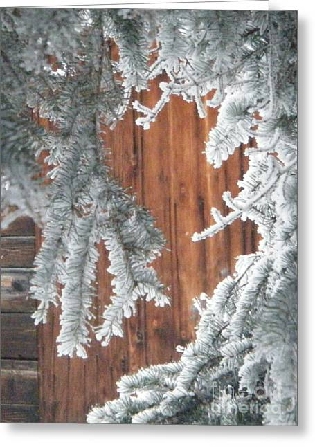 Marianne Nana Betts Photography Greeting Cards - through the Pines Greeting Card by Marianne NANA Betts