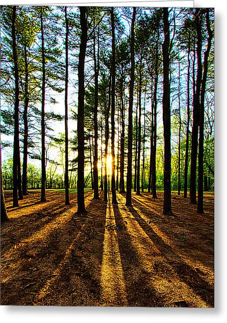 Pines Greeting Cards - Through the Pines Greeting Card by Phil Koch