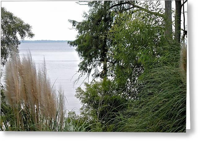 Through The Trees Greeting Card by Carolyn Ricks