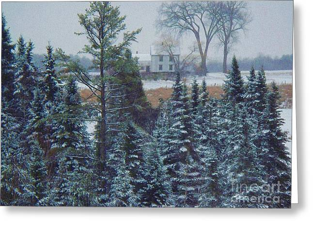 Winter In Maine Greeting Cards - Through The Trees Greeting Card by Joy Nichols