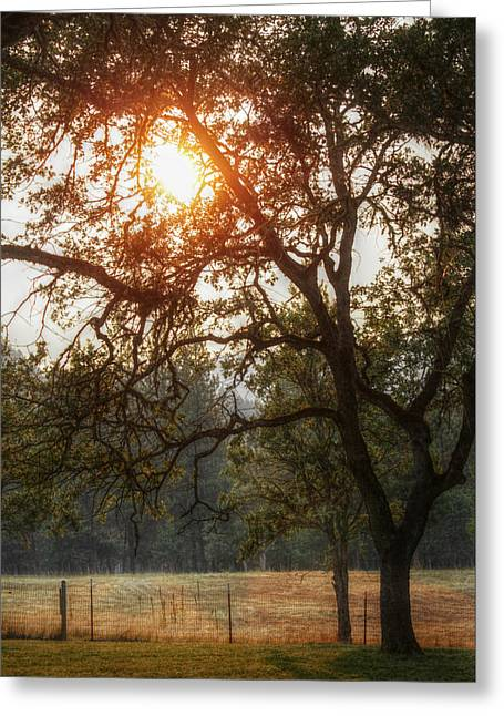 Melanie Lankford Photography Greeting Cards - Through the Trees Greeting Card by Melanie  Lankford Photography