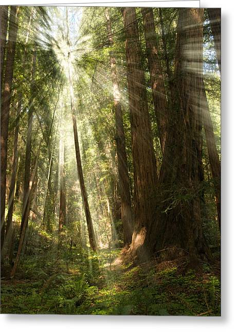 Marin County Greeting Cards - Through the Trees Greeting Card by Mick Burkey