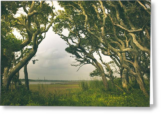 Topsail Island Photographs Greeting Cards - Through The Twisty Trees Greeting Card by Shane Holsclaw