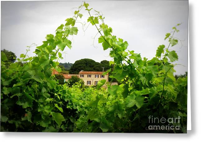 Lainie Wrightson Greeting Cards - Through the Vines Greeting Card by Lainie Wrightson