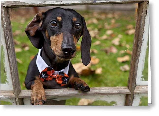 Black And Tan Dachshund Greeting Cards - Through The Window Greeting Card by Summer Kozisek