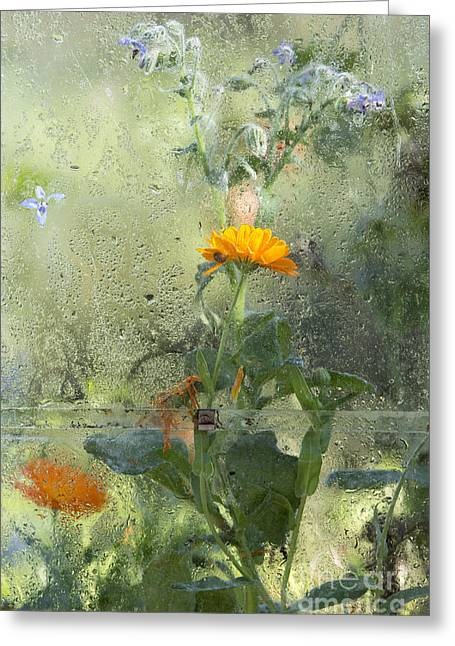 Annuals Greeting Cards - Through The Window  Greeting Card by Tim Gainey