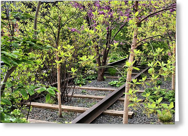 High Line Greeting Cards - Through the Woods Greeting Card by JC Findley