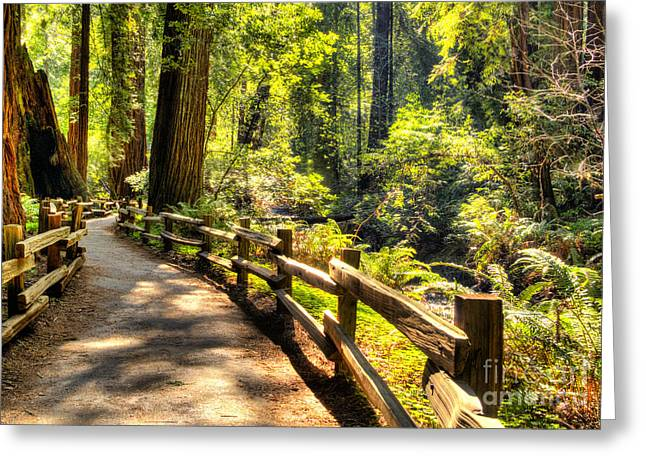 Marin County Greeting Cards - Through the Woods Greeting Card by Paul Gillham