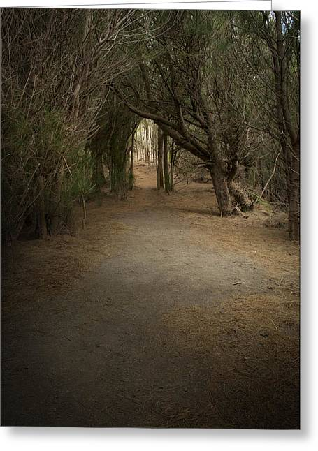 Through The Woods Greeting Card by Robert Martin