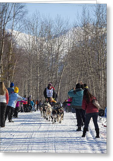 Dog Sled Racing Greeting Cards - Through Trees and People Greeting Card by Tim Grams