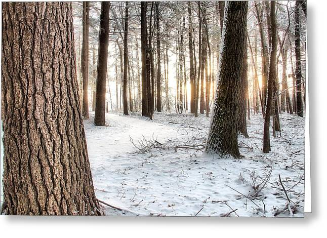Thru The Pines Greeting Card by Andrea Galiffi