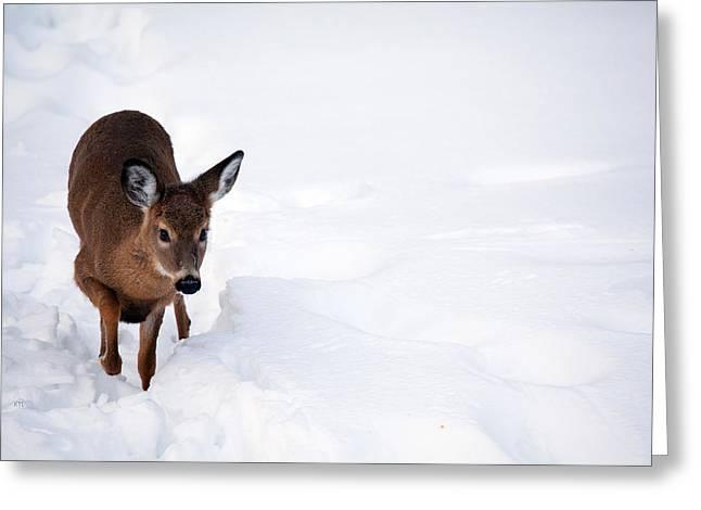 Deer In Snow Greeting Cards - Thru The Snow Greeting Card by Karol  Livote
