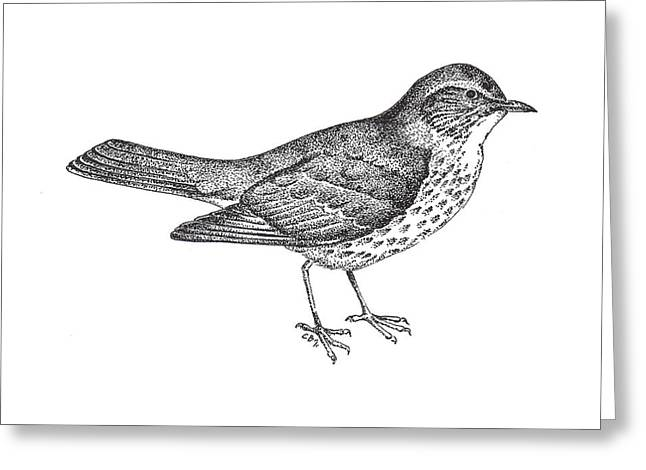 Thrush Bird Drawing Greeting Card by Christy Beckwith
