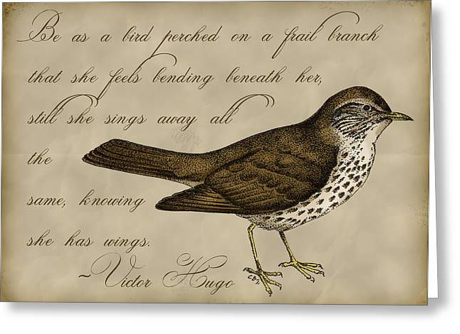 Thrush Bird Wall Art Greeting Card by Christy Beckwith
