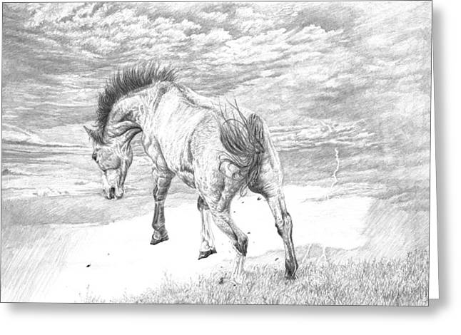 Horse Drawings Greeting Cards - Thunder and Lightning Greeting Card by Laura Klassen