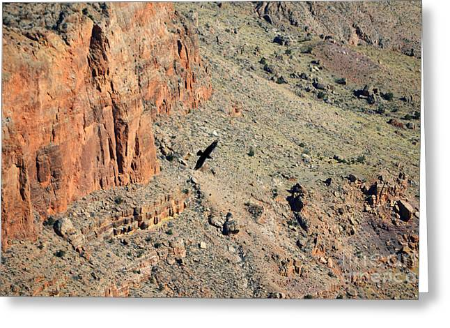Grand Canyon Greeting Cards - Thunderbird Gliding over Cliff in Grand Canyon National Park Greeting Card by Shawn O