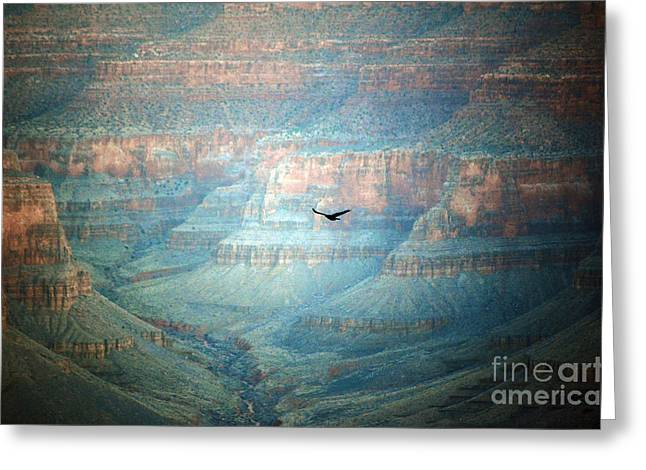 Grand Canyon Photographs Greeting Cards - Thunderbird in Flight inside Grand Canyon National Park Valley Grain Greeting Card by Shawn O