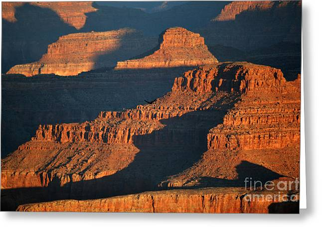 Grand Canyon Greeting Cards - Thunderbird Soaring over Morning Hues of Grand Canyon National Park Greeting Card by Shawn O
