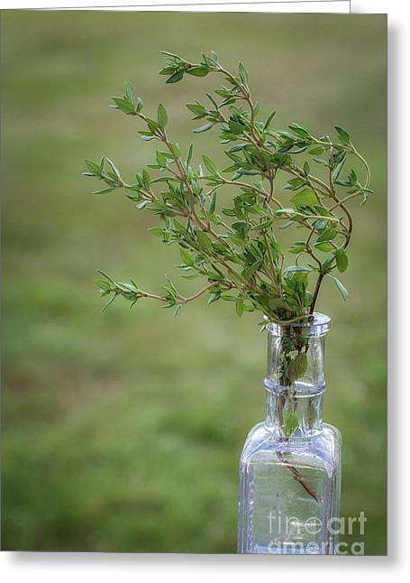 Croce Greeting Cards - Thyme in a Bottle Greeting Card by Scott Thorp