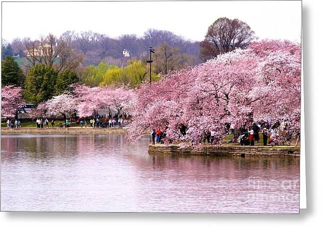Trees Reflecting In Water Greeting Cards - Tidal Basin Cherry Trees and Arlington House Greeting Card by Patti Whitten