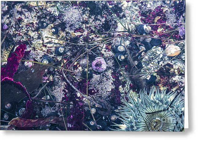 Anenome Greeting Cards - Tidal Pool Assortment Greeting Card by Terry Rowe