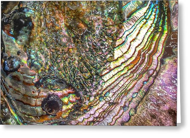 Abalone Greeting Cards - Tide and Time Greeting Card by Casey Rasmussen White