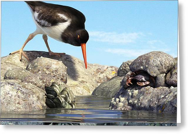 Tide Pools Greeting Cards - Tide Pool Greeting Card by Gary Hanna