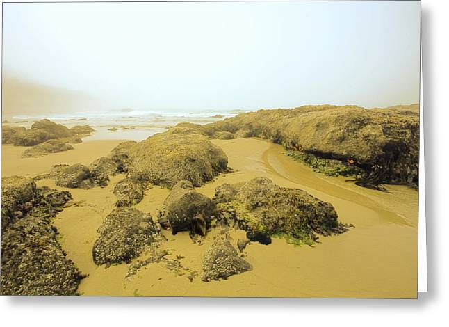 Foggy Beach Greeting Cards - Tidepool Walkways Greeting Card by Bonnie Bruno