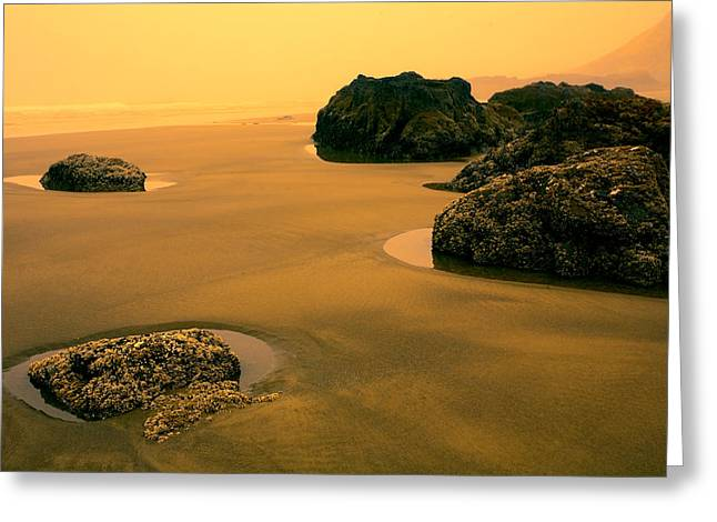 Strawberry Hill Greeting Cards - Tidepools at Dusk Greeting Card by Bonnie Bruno