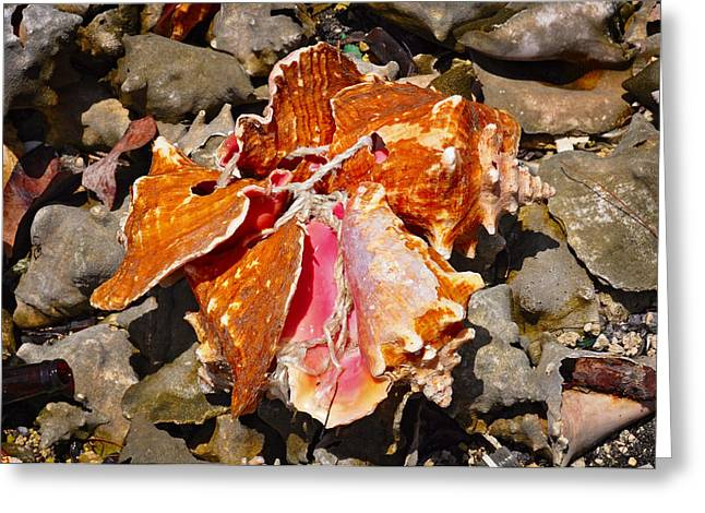 Shell Texture Greeting Cards - Tied Conch Greeting Card by Rashad Penn