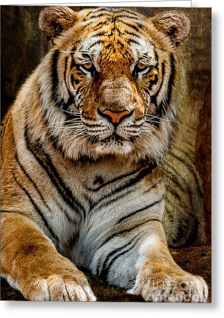 """wild Cat"" Greeting Cards - Tiger Greeting Card by Adrian Evans"