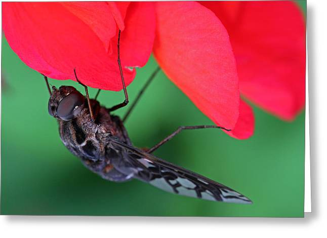 Morph Greeting Cards - Tiger Bee Fly Greeting Card by Juergen Roth