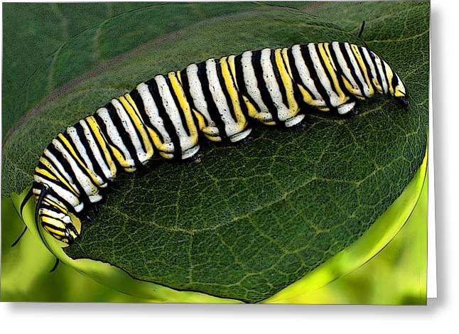 Tiger Swallowtail Digital Art Greeting Cards - Tiger Caterpillar Greeting Card by Gerald Marella