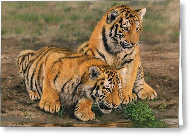 Tiger Greeting Cards - Tiger Cubs Greeting Card by David Stribbling