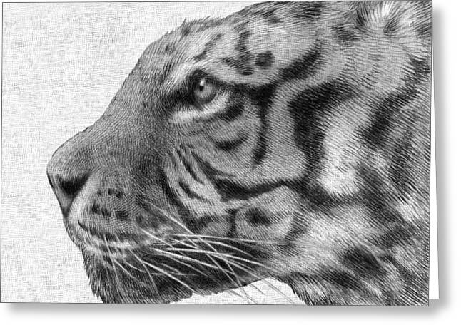 Tiger Illustration Greeting Cards - Tiger Greeting Card by Eric Fan