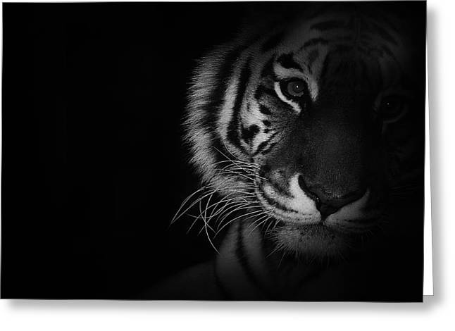 Bigcat Greeting Cards - Tiger Eyes Greeting Card by Martin Newman