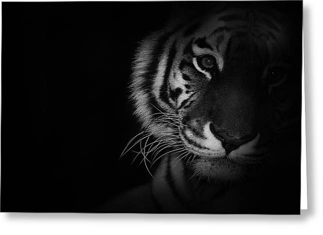 Tiger Eyes Greeting Card by Martin Newman