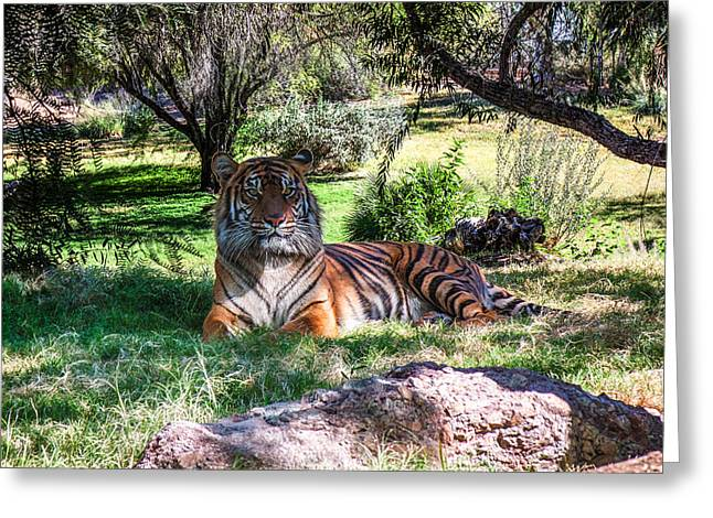 Green Greeting Cards - Tiger Greeting Card by Fred Larson
