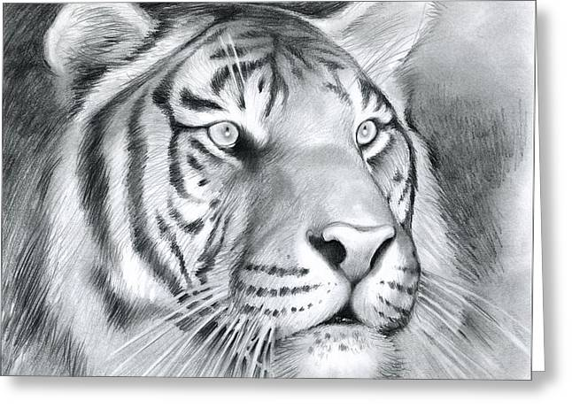 Tiger Drawings Greeting Cards - Tiger Greeting Card by Greg Joens