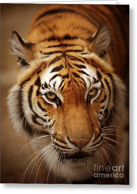 Red Tiger Greeting Cards - Tiger Greeting Card by HD Connelly