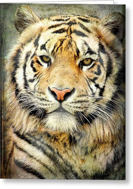 Bobcats Photographs Greeting Cards - Tiger III Greeting Card by Athena Mckinzie