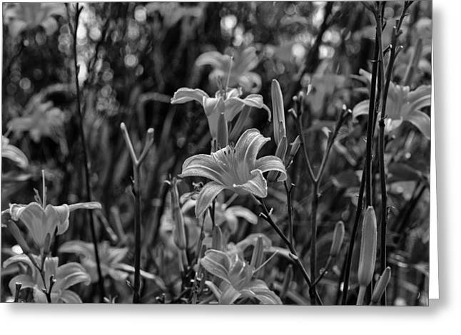 Flower Photos Greeting Cards - Tiger lilies Greeting Card by Chris Flees
