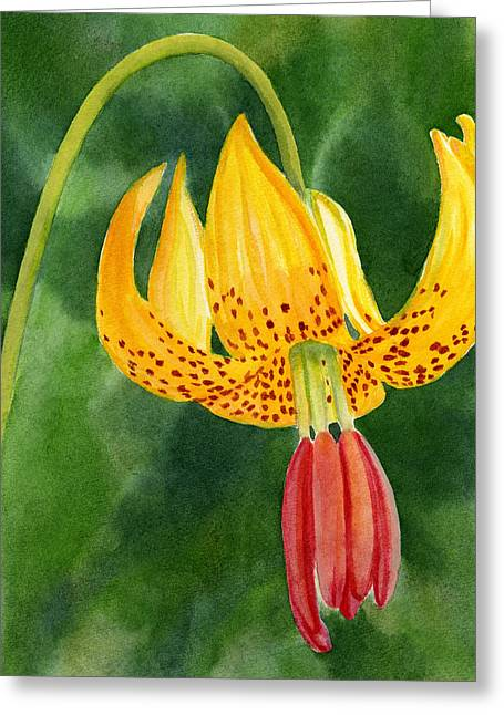 Watercolor Tiger Greeting Cards - Tiger Lily Blossom with Background Greeting Card by Sharon Freeman