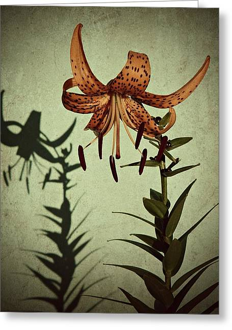 Yearly Greeting Cards - Tiger Lily Greeting Card by Chris Berry