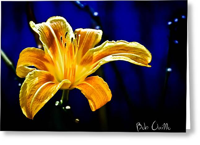 Wildflower Photograph Greeting Cards - Tiger Lily on Waters Edge Greeting Card by Bob Orsillo